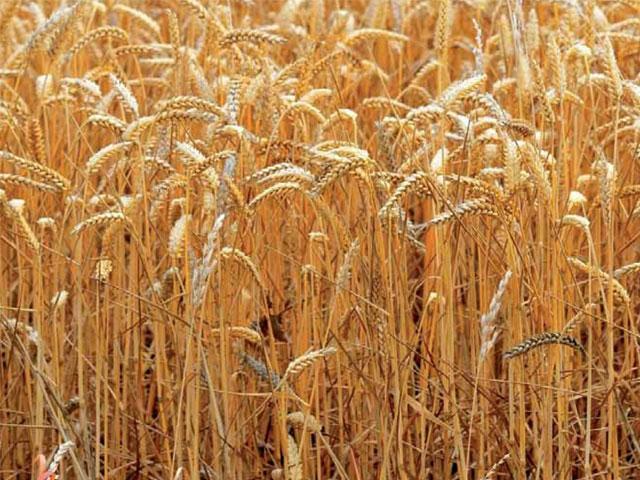 Biocombustibles y crisis alimentaria