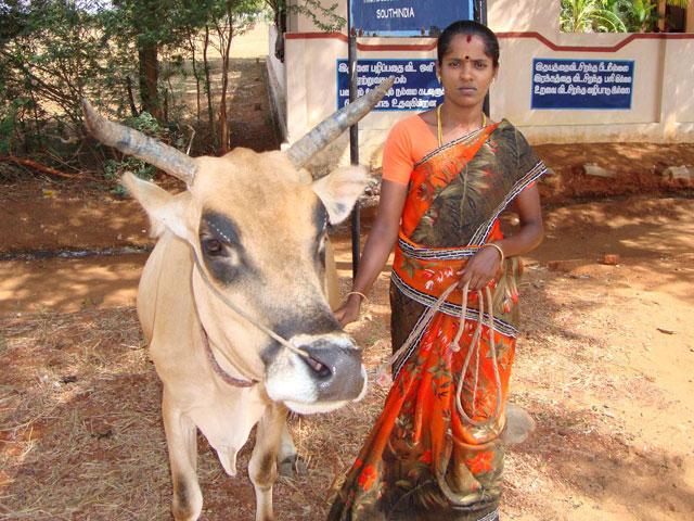 Apadrina una vaca y colabora con mujeres de la India