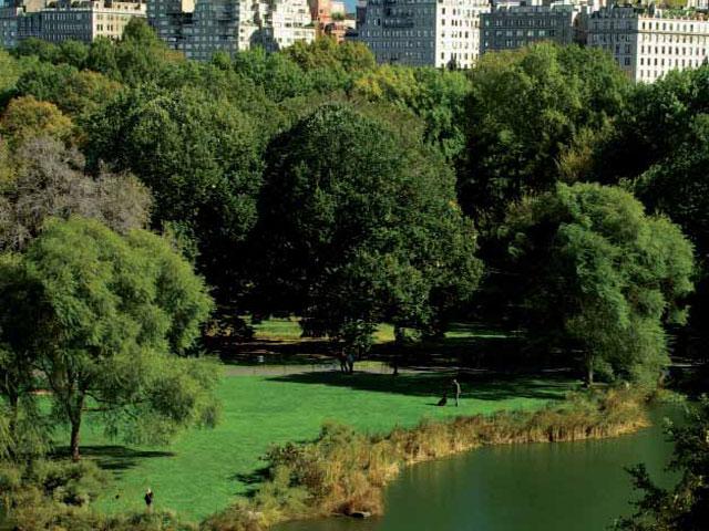Donaciones para Central Park
