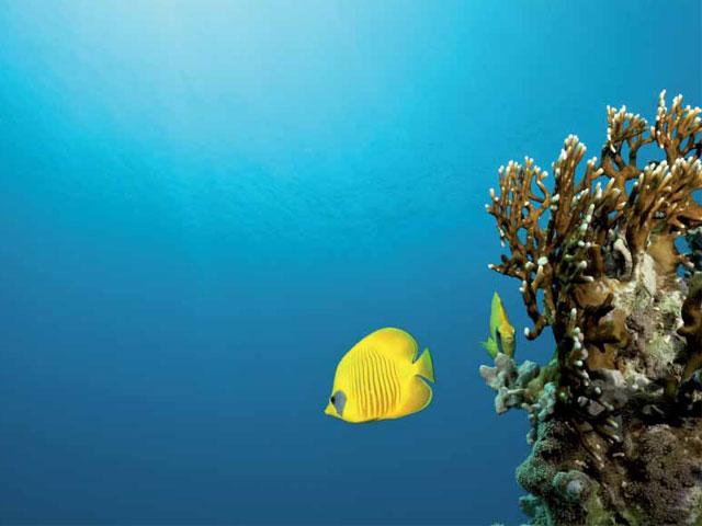 Donaciones a lo más profundo del océano