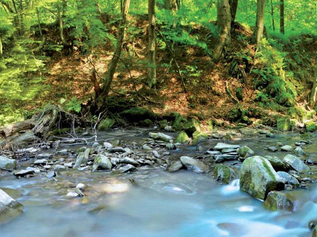 Los bosques hacen sostenible la vida humana