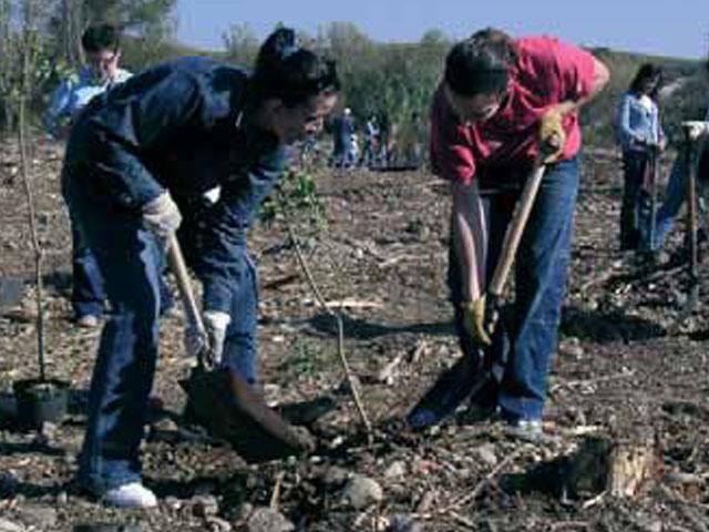 Empleados de DKV Seguros plantan 700 árboles