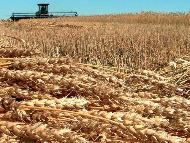 España impulsa cultivos energéticos