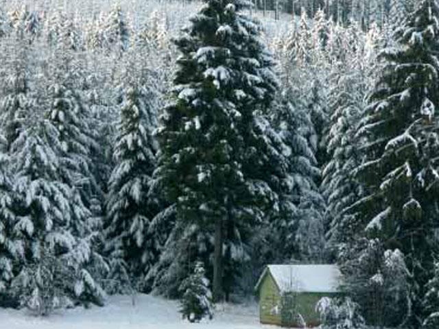 13 millones de hectáreas de superficie forestal se pierden cada año