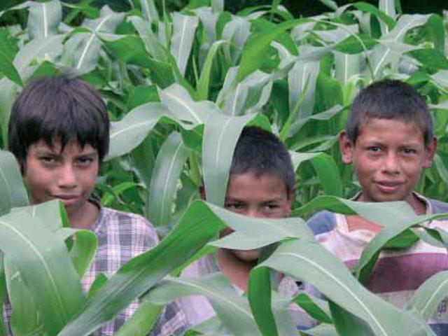 UNICEF edita una guía para ayudar a identificar y erradicar el trabajo infantil