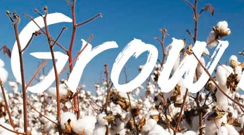 C&A ha sido reconocida como líder mundial en el uso de algodón orgánico