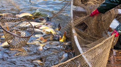 La nueva Política de Pesca Común, la esperanza de conseguir océanos sostenibles