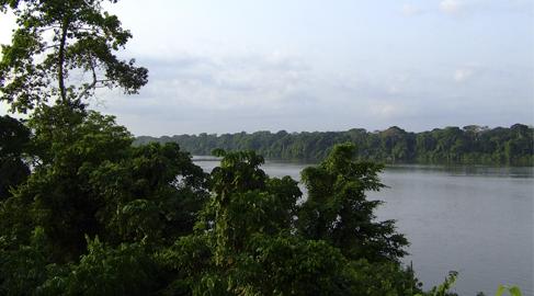 Los bosques, mucho más que paisajes