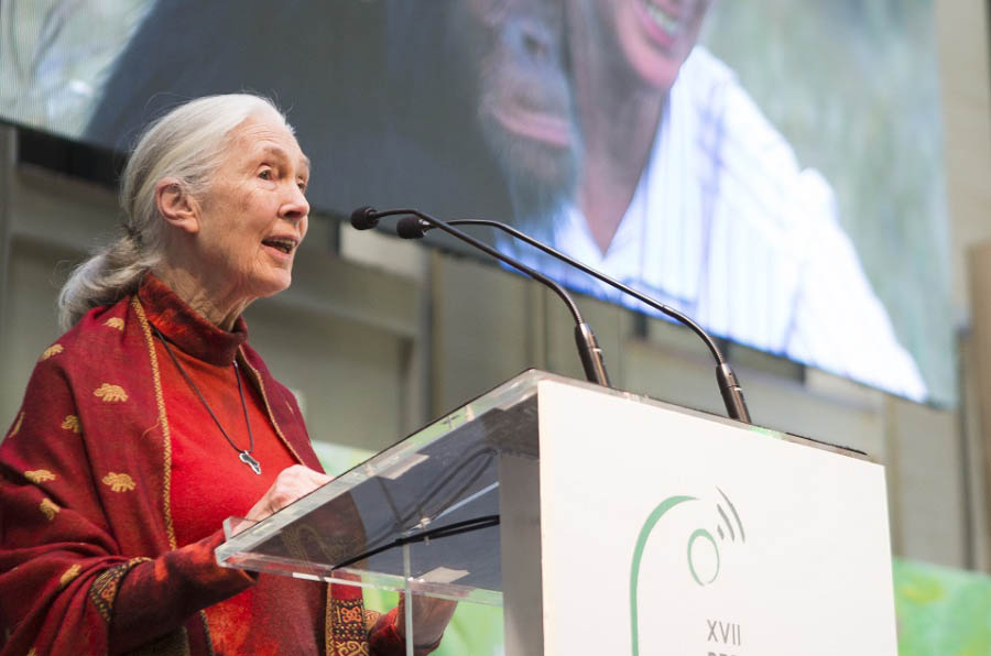 <p>Jane Goodall durante el discurso de la entrega de los XVII Premios Periodísticos de Ecovidrio.</p>