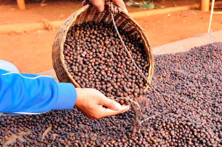 Pacto Mundial crea un grupo de trabajo para promover los ODS en la industria alimentaria