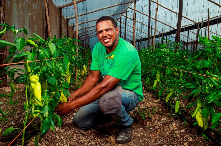 <p>Agricultor financiado por el Banco Adopem, la entidad dominicana de la Fundación Microfinanzas BBVA.</p>