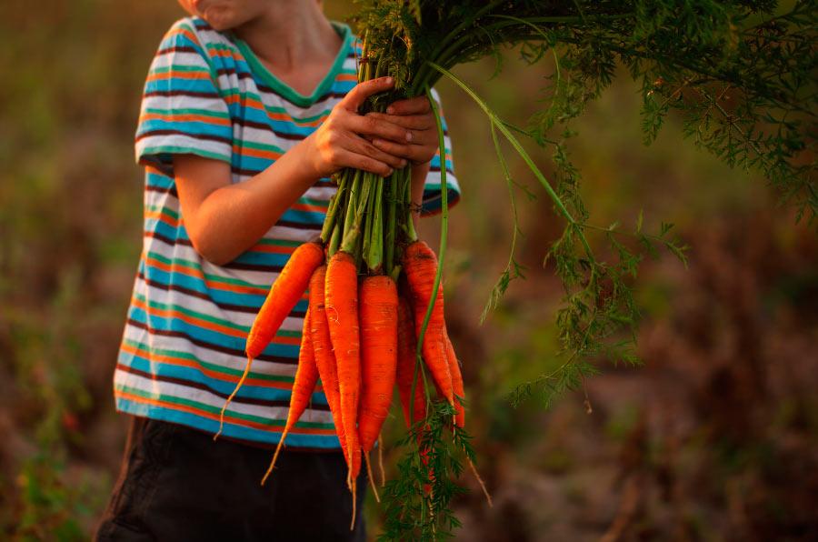 Alrededor del 70% del trabajo infantil se produce en la agricultura