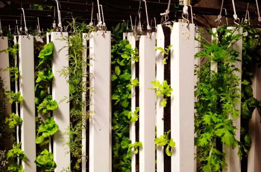 <p>Cultivo vertical del proyecto madrileño Achipámpanos. Foto: Achipámpanos.</p>