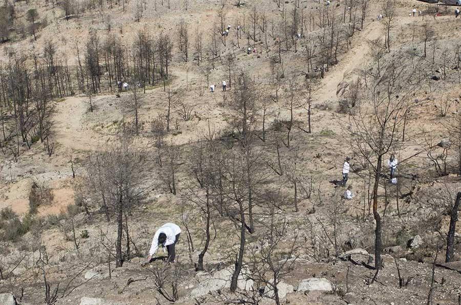 <p>Eurofred compensa sus emisiones de CO2 con repoblaciones forestales.</p>