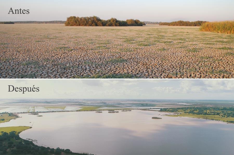 <p>Estado del Espacio Natural de Doñana antes y después de la intervención de Heineken.</p>