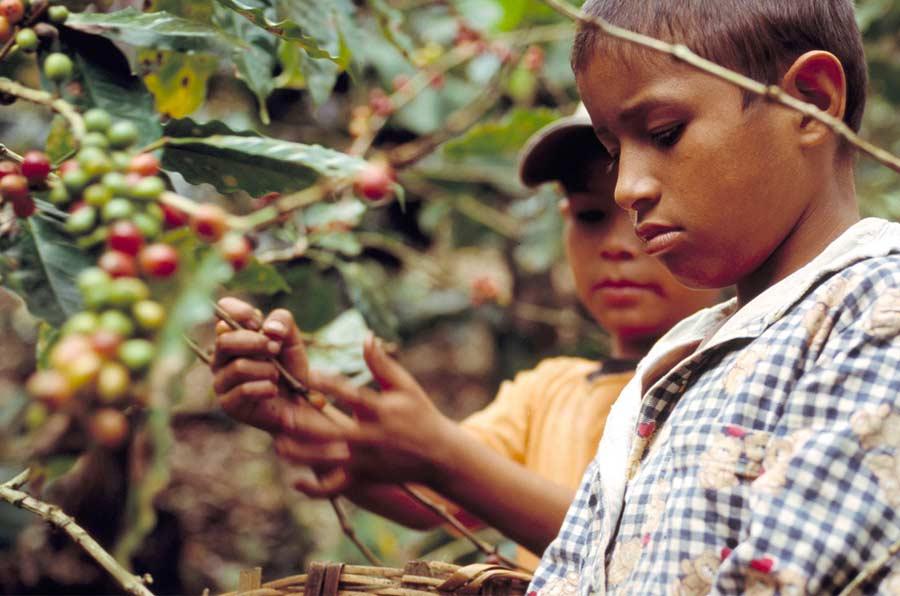 Trabajo decente en las cadenas de suministro: retos y oportunidades