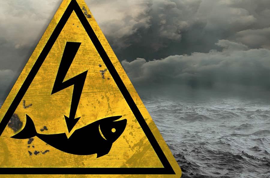 Bruselas prohíbe la pesca eléctrica en la Unión Europea a partir de 2021