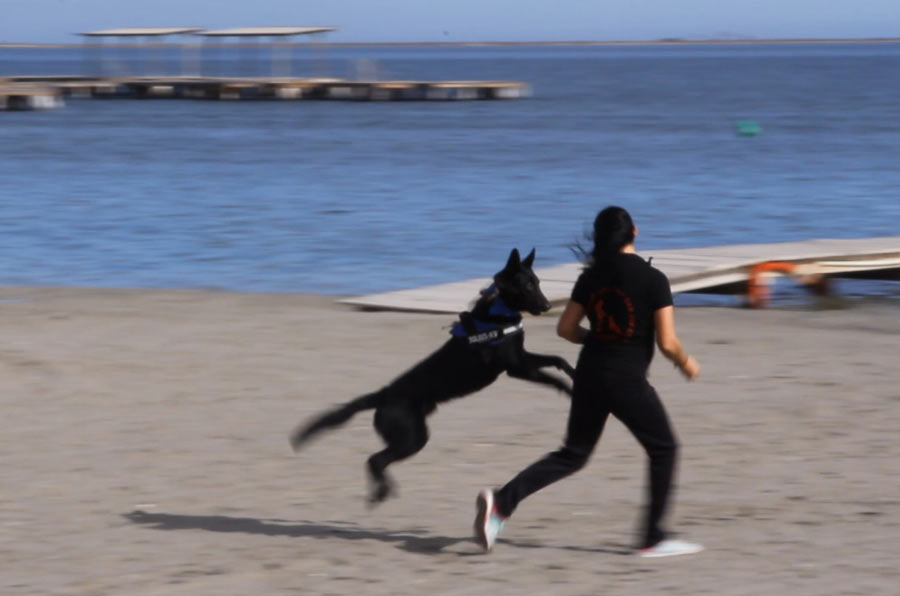 Terapia con perros para ayudar a encontrar empleo a las víctimas de violencia de género
