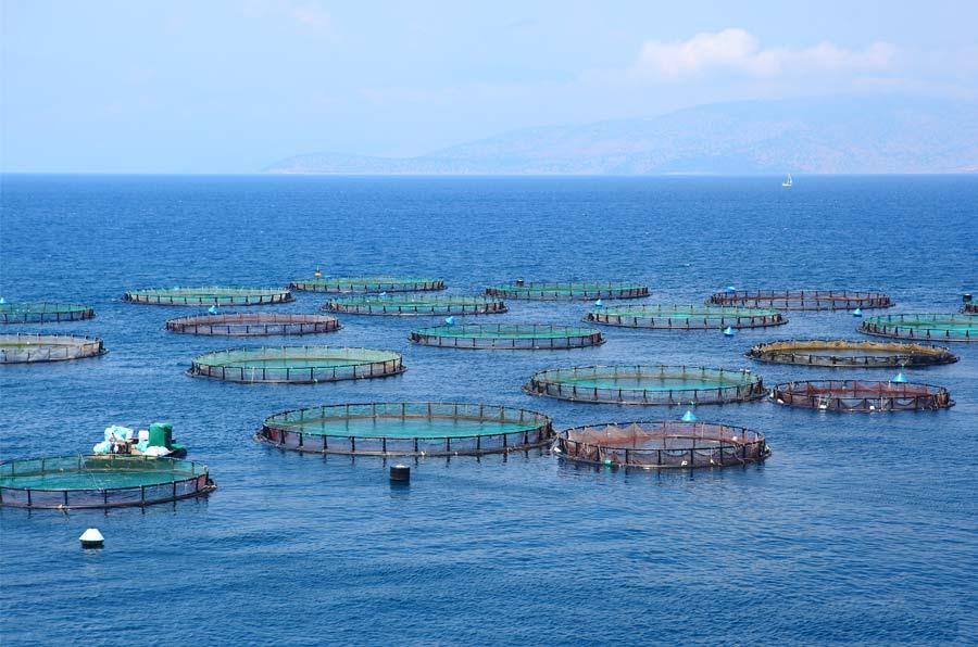 La industria del salmón y sus consecuencias en la Patagonia