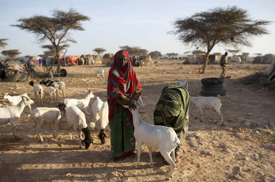 """""""Probabilidad de hambruna"""": una nueva clasificación para activar la alerta"""