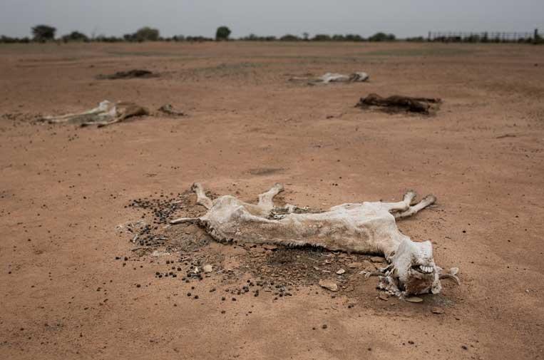 La crisis climática podría dejar a más de mil millones de personas sin alimento