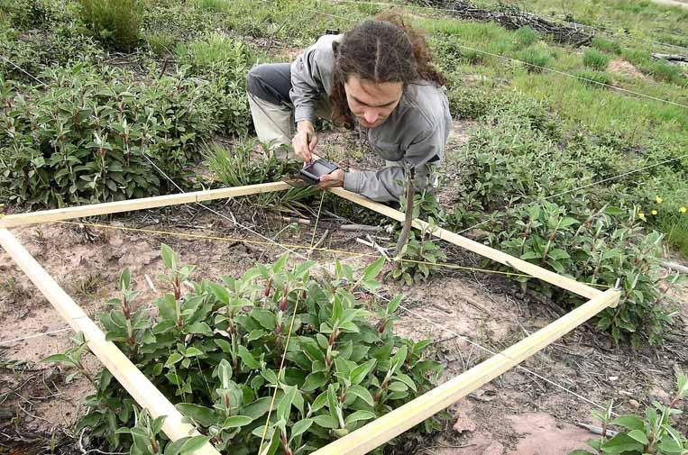 <p>Sylvestris está especializada en restauración forestal, desarrollo rural, jardines verticales y consultoría medioambiental.</p>