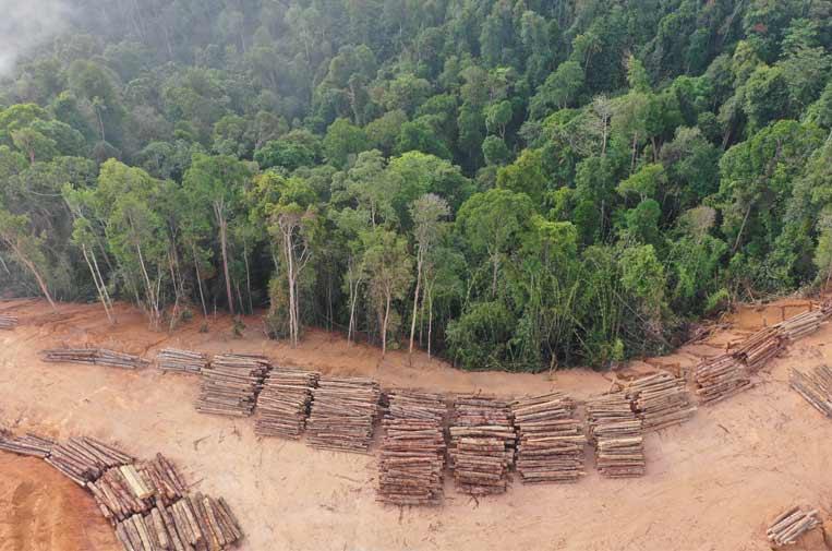 El riesgo de la deforestación de los bosques de América Latina