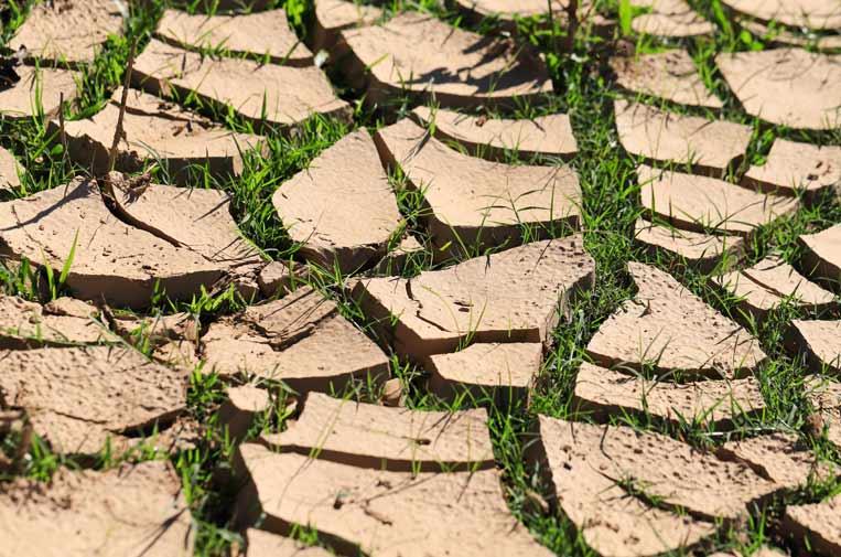 Empresas y resiliencia climática: claves para afrontar el futuro