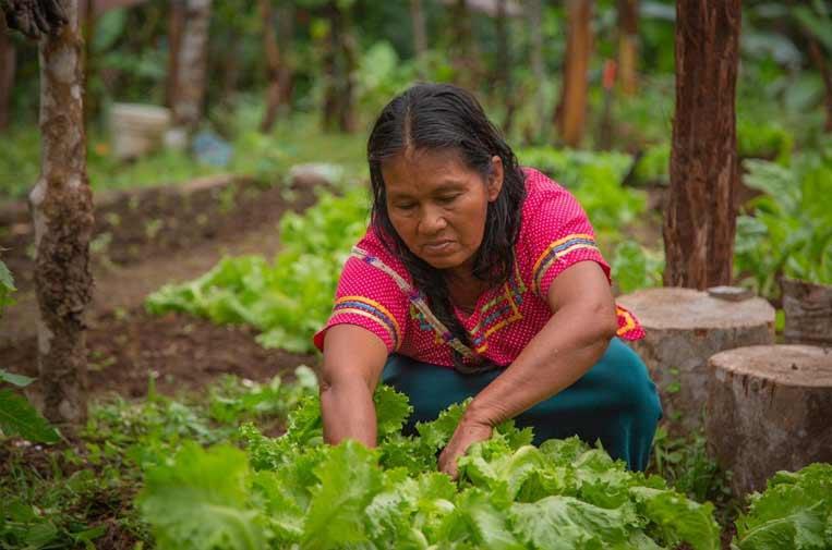 25 organizaciones se unen para empoderar a las mujeres rurales frente a la pandemia