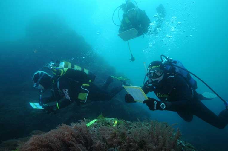 <p>Proyecto Observadores del mar. Foto: CSIC.</p>