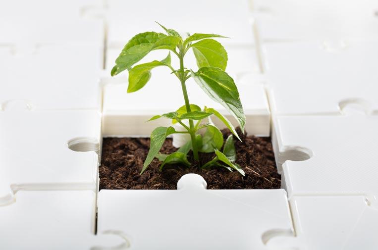 La estrategia para la sostenibilidad en cuatro pasos