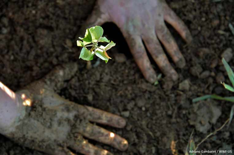 Los riesgos de la pérdida de biodiversidad para el planeta y la salud humana