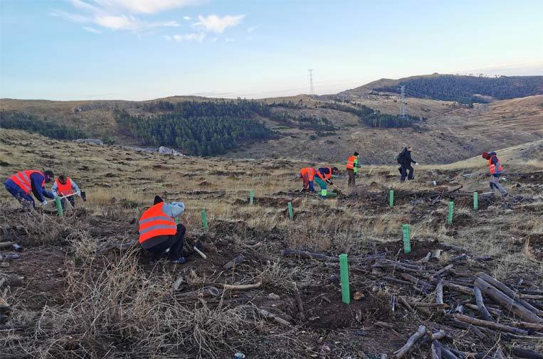 <p>Repsol Impacto Social cuenta con planes de reforestación en curso en varias zonas de España a través de Sylvestris.</p>