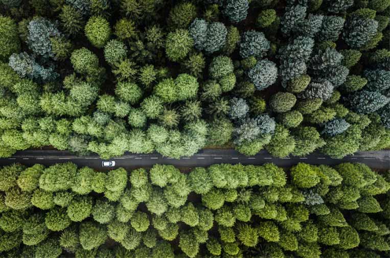 ¿Cómo cumplir los objetivos climáticos a partir de soluciones basadas en la propia naturaleza?