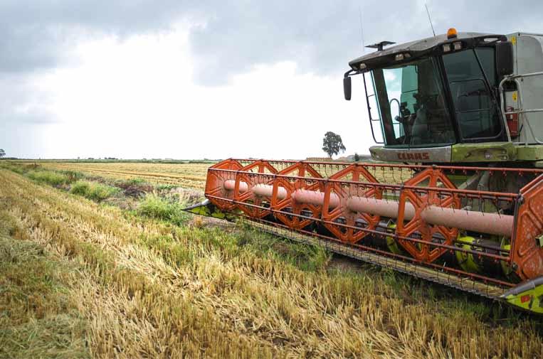 Nespresso dona 152 toneladas de arroz a bancos de alimentos con el reciclaje de sus cápsulas