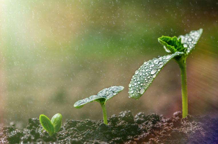 La Taxonomía ESG: sostenibilidad para no sostenibles