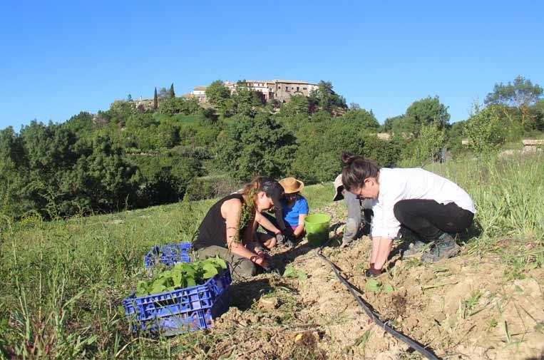 <p>Teletrabajadores, en plena faena en el huerto. Foto: J.B.</p>
