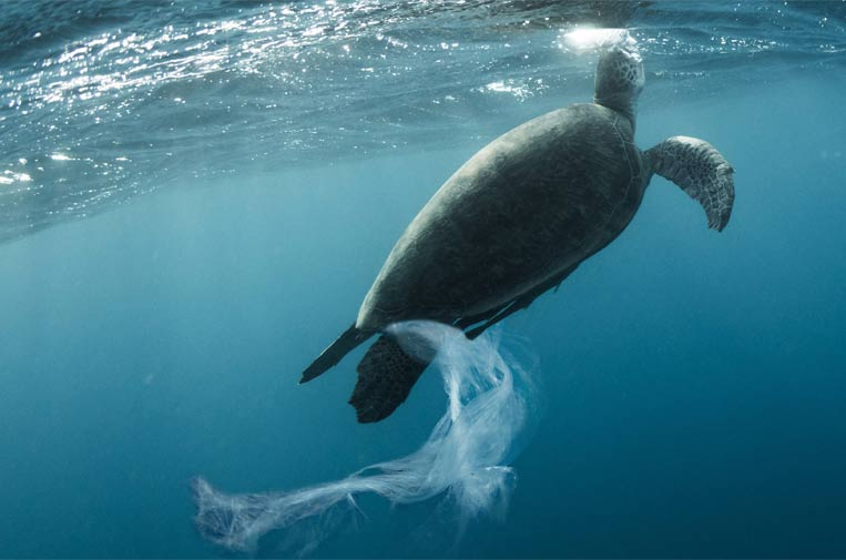 El sector del turismo se une en busca de alternativas al plástico