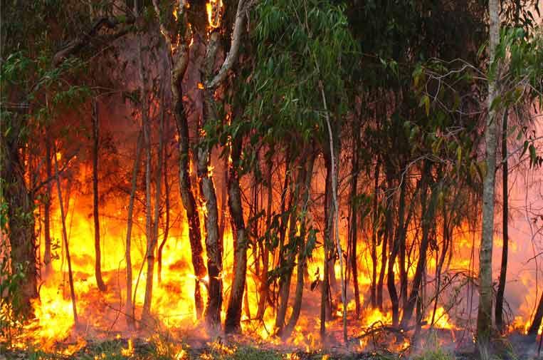 Olas de calor e incendios: una amenaza cada vez más frecuente para la salud y el medio ambiente