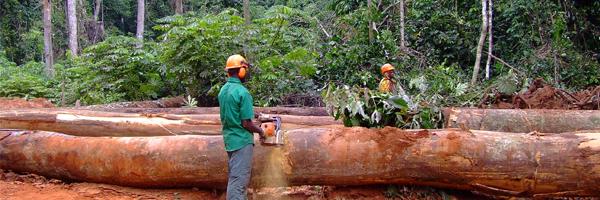 bosques-madera