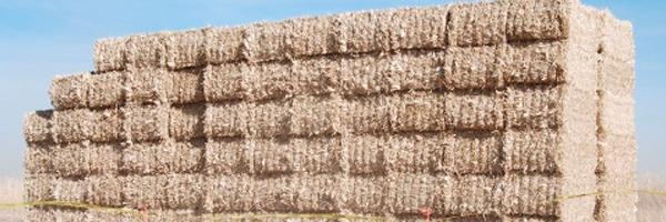 Pila de biomasa/Abengoa