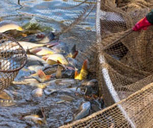 sobreexplotacion-pesca